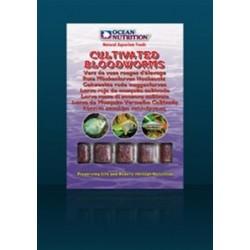 OCEAN NUTRITION LARVA ROJA CULTIVADA 100 G