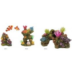 Rocas con coral