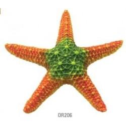 Estrella mar naranja