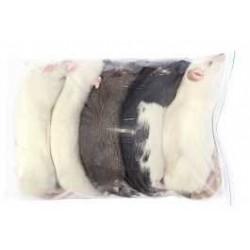Rata de laboratorio congelada