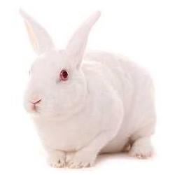 Conejo entero congelado