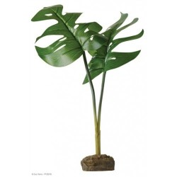 Philidendron