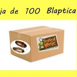 Caja 100 cucaracha argentina L-M